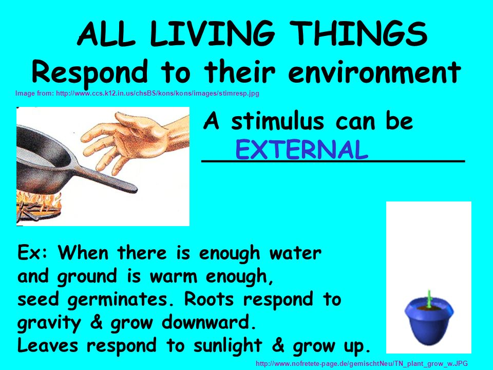 ALL LIVING THINGS Respond to their environment A stimulus can be _________________ Ex: When there is enough water and ground is warm enough, seed germinates.