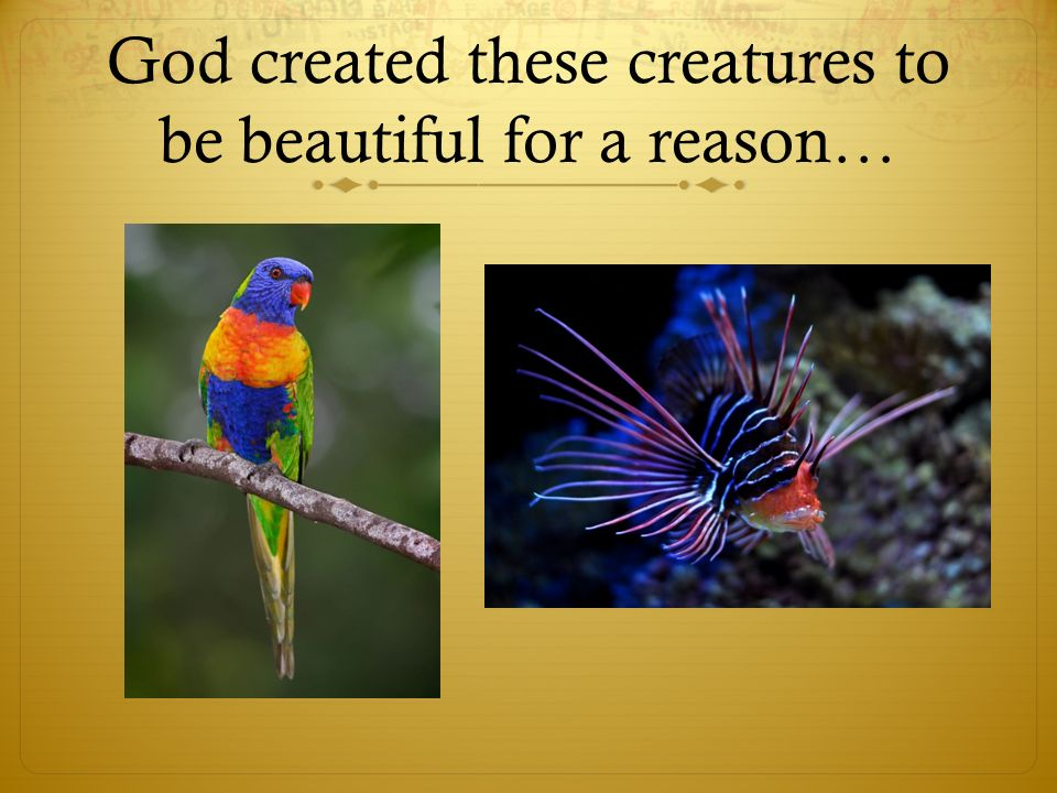 God created these creatures to be beautiful for a reason…