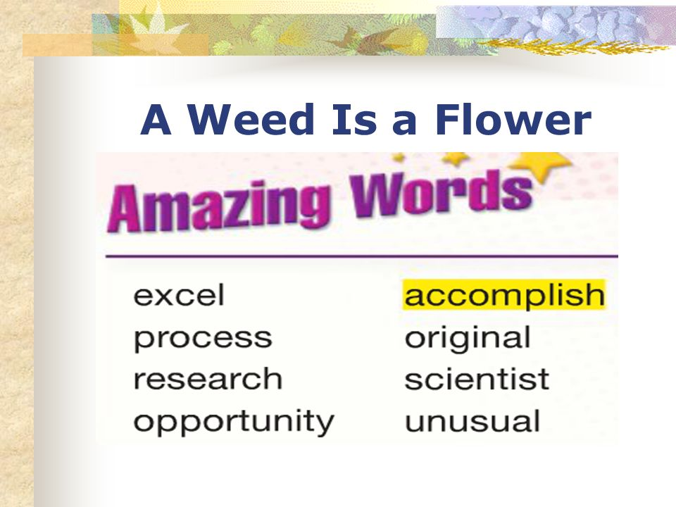 A Weed Is a Flower Amazing Words