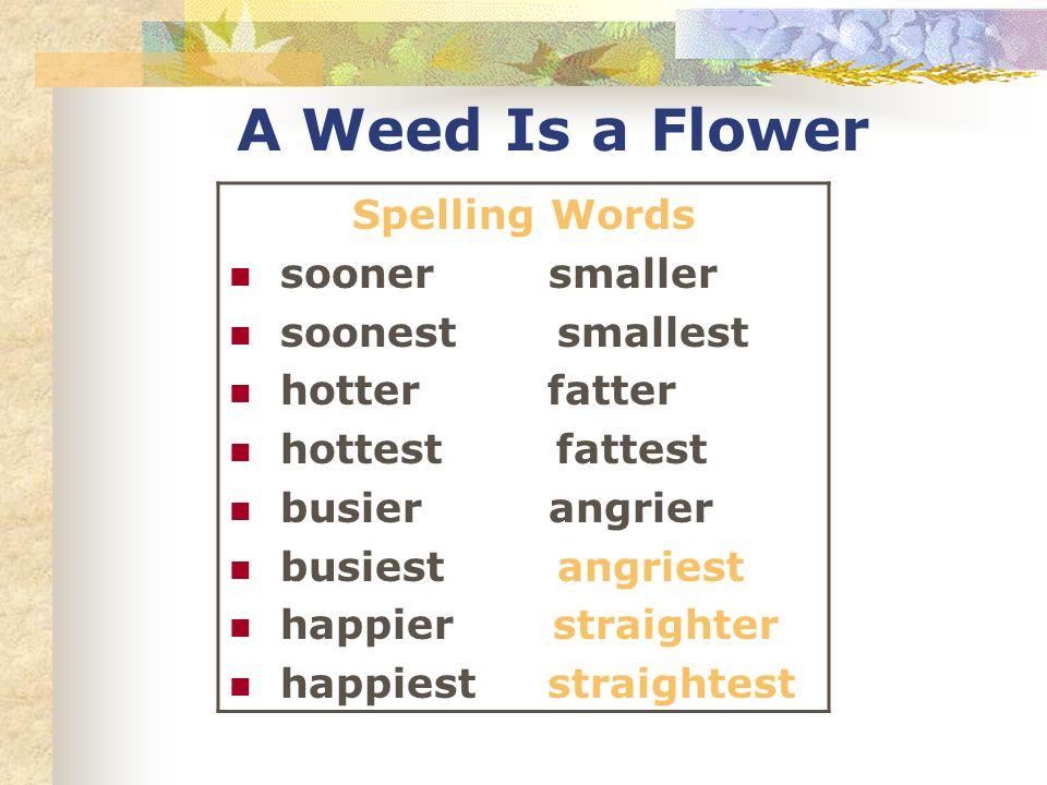 A Weed Is a Flower Spelling Words sooner smaller soonest smallest hotter fatter hottest fattest busier angrier busiest angriest happier straighter hap