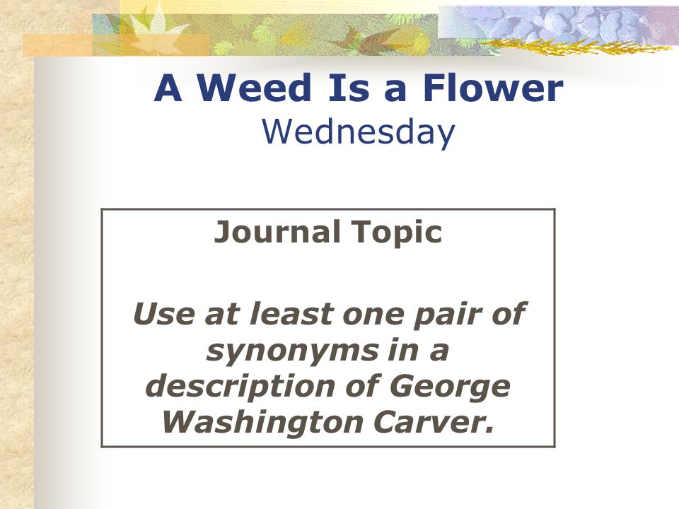 A Weed Is a Flower Wednesday Journal Topic Use at least one pair of synonyms in a description of George Washington Carver.