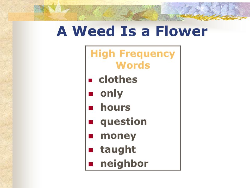 A Weed Is a Flower High Frequency Words clothes only hours question money taught neighbor
