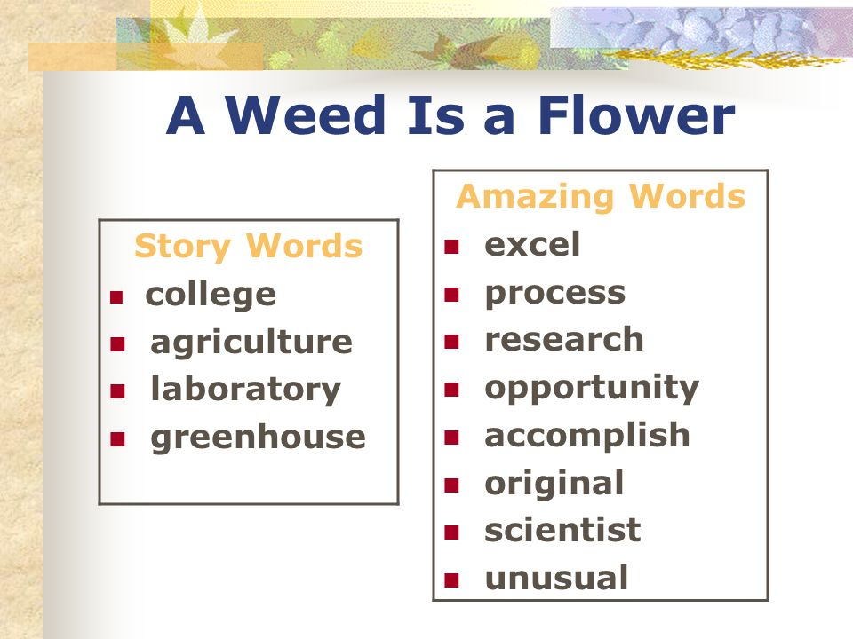 A Weed Is a Flower Story Words college agriculture laboratory greenhouse Amazing Words excel process research opportunity accomplish original scientist unusual