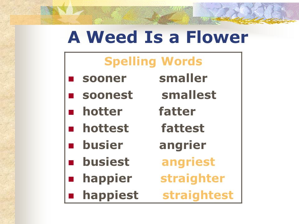 A Weed Is a Flower Spelling Words sooner smaller soonest smallest hotter fatter hottest fattest busier angrier busiest angriest happier straighter happiest straightest