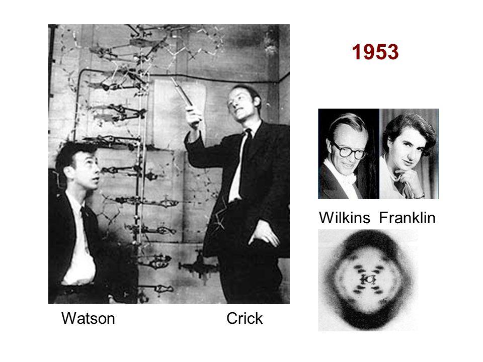 Watson Crick Wilkins Franklin 1953