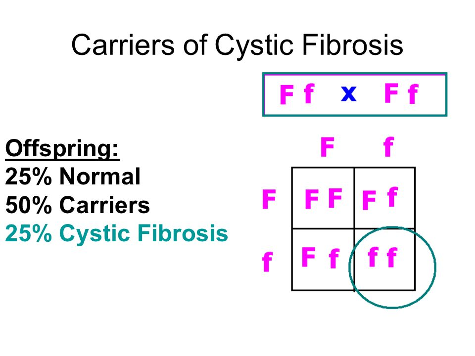 Carriers of Cystic Fibrosis Offspring: 25% Normal 50% Carriers 25% Cystic Fibrosis
