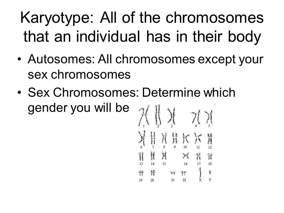 Karyotype: All of the chromosomes that an individual has in their body Autosomes: All chromosomes except your sex chromosomes Sex Chromosomes: Determi