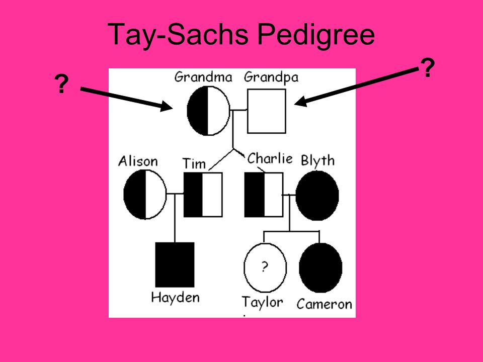 Tay-Sachs Pedigree ? ?
