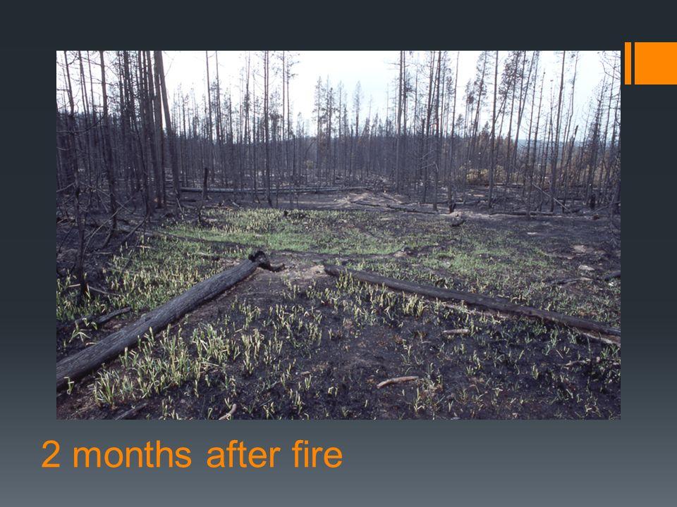 2 months after fire
