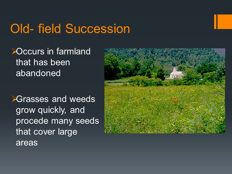 Old- field Succession Occurs in farmland that has been abandoned Grasses and weeds grow quickly, and procede many seeds that cover large areas