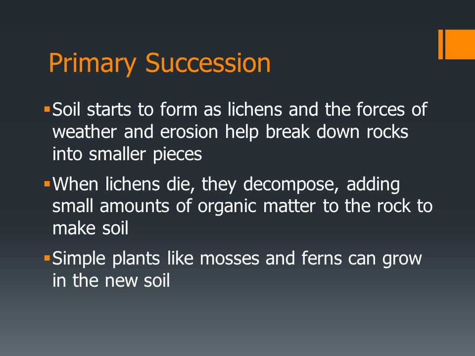 Primary Succession Soil starts to form as lichens and the forces of weather and erosion help break down rocks into smaller pieces When lichens die, th