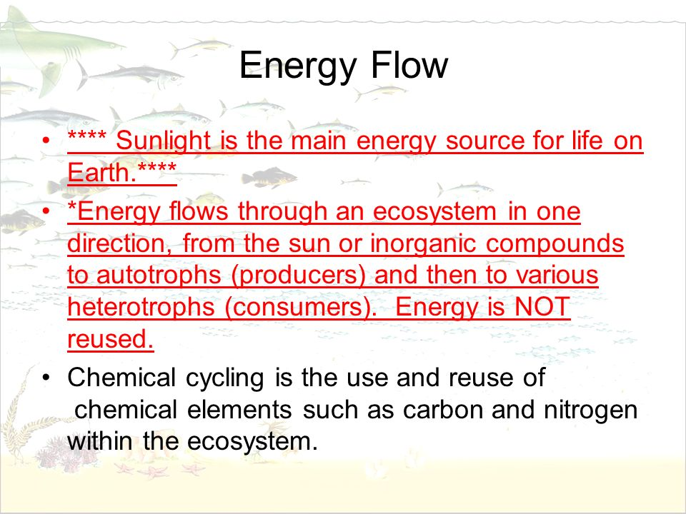 Energy Flow **** Sunlight is the main energy source for life on Earth.**** *Energy flows through an ecosystem in one direction, from the sun or inorga