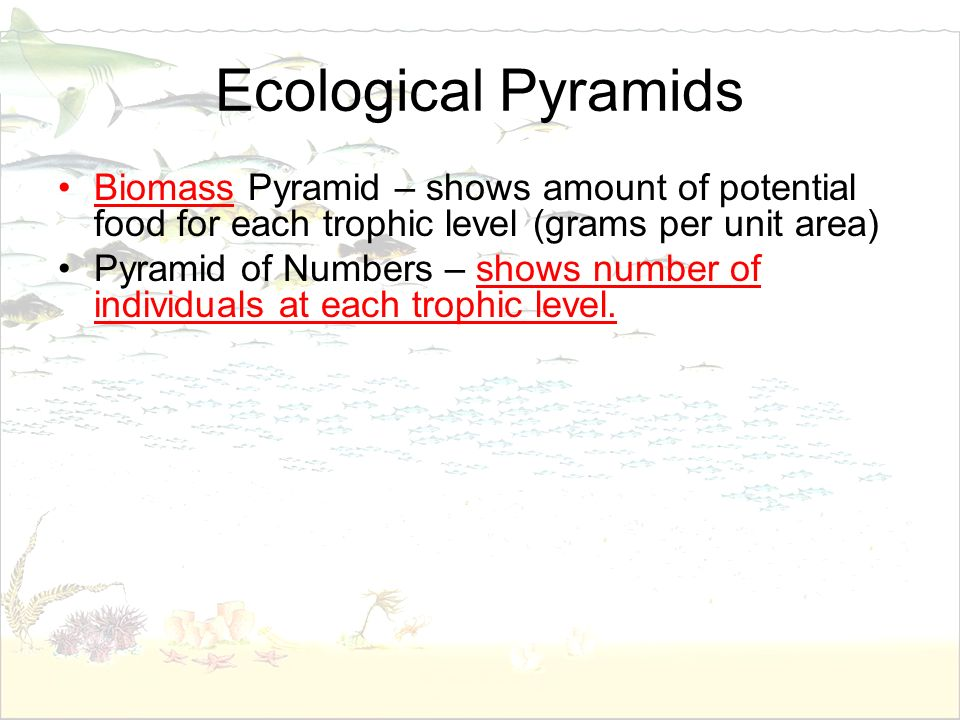 Ecological Pyramids Biomass Pyramid – shows amount of potential food for each trophic level (grams per unit area) Pyramid of Numbers – shows number of