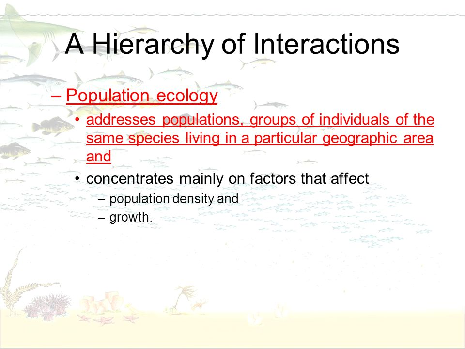A Hierarchy of Interactions –Population ecology addresses populations, groups of individuals of the same species living in a particular geographic are