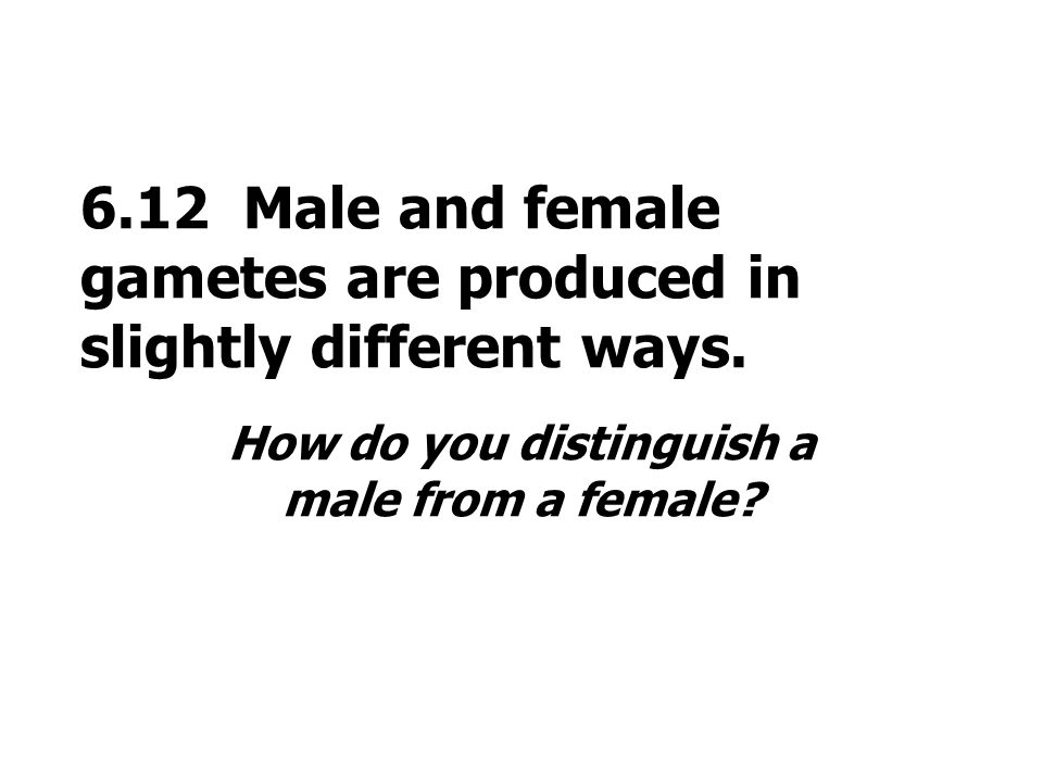 6.12 Male and female gametes are produced in slightly different ways. How do you distinguish a male from a female?