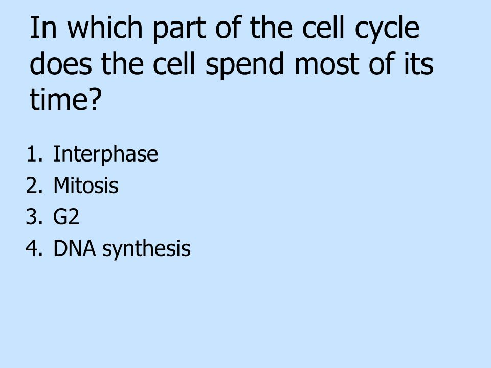 In which part of the cell cycle does the cell spend most of its time? 1.Interphase 2.Mitosis 3.G2 4.DNA synthesis