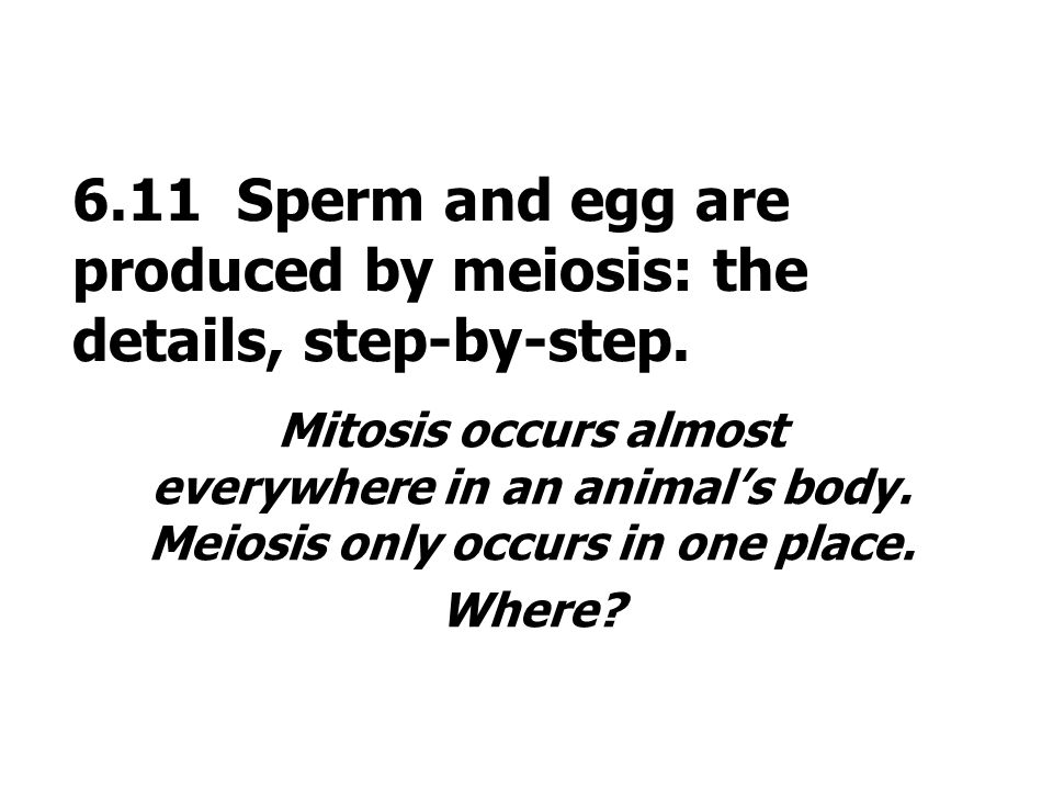 6.11 Sperm and egg are produced by meiosis: the details, step-by-step. Mitosis occurs almost everywhere in an animals body. Meiosis only occurs in one