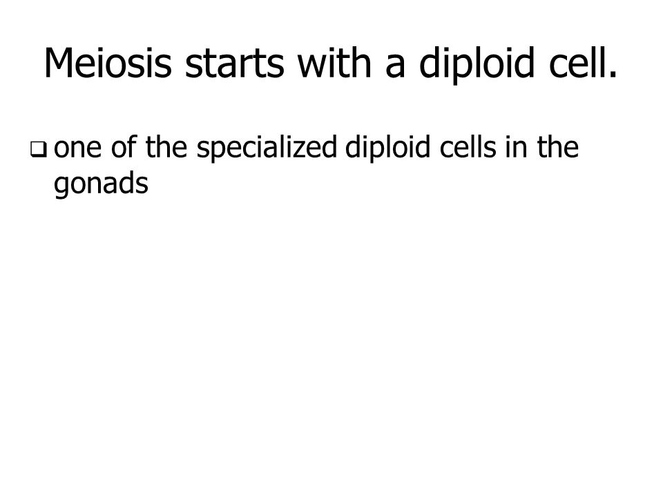 Meiosis starts with a diploid cell. one of the specialized diploid cells in the gonads