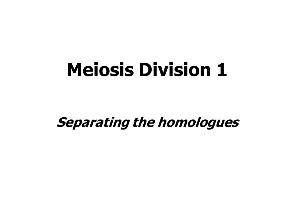 Meiosis Division 1 Separating the homologues