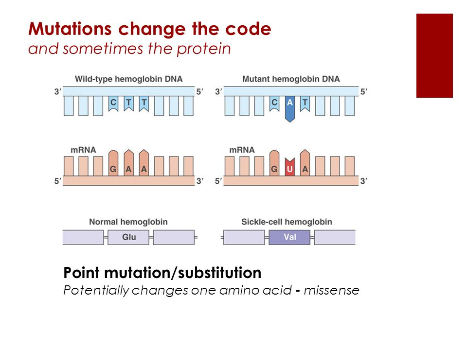 Point mutation/substitution Potentially changes one amino acid - missense Mutations change the code and sometimes the protein