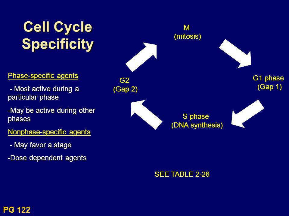 Cell Cycle SpecificityM(mitosis) G1 phase (Gap 1) S phase (DNA synthesis) G2 (Gap 2) SEE TABLE 2-26 Phase-specific agents - Most active during a parti
