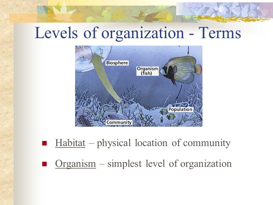 Levels of organization - Terms Habitat – physical location of community Organism – simplest level of organization