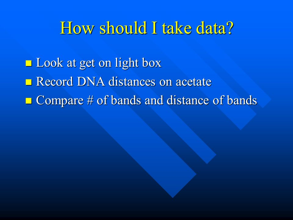 How should I take data? Look at get on light box Look at get on light box Record DNA distances on acetate Record DNA distances on acetate Compare # of