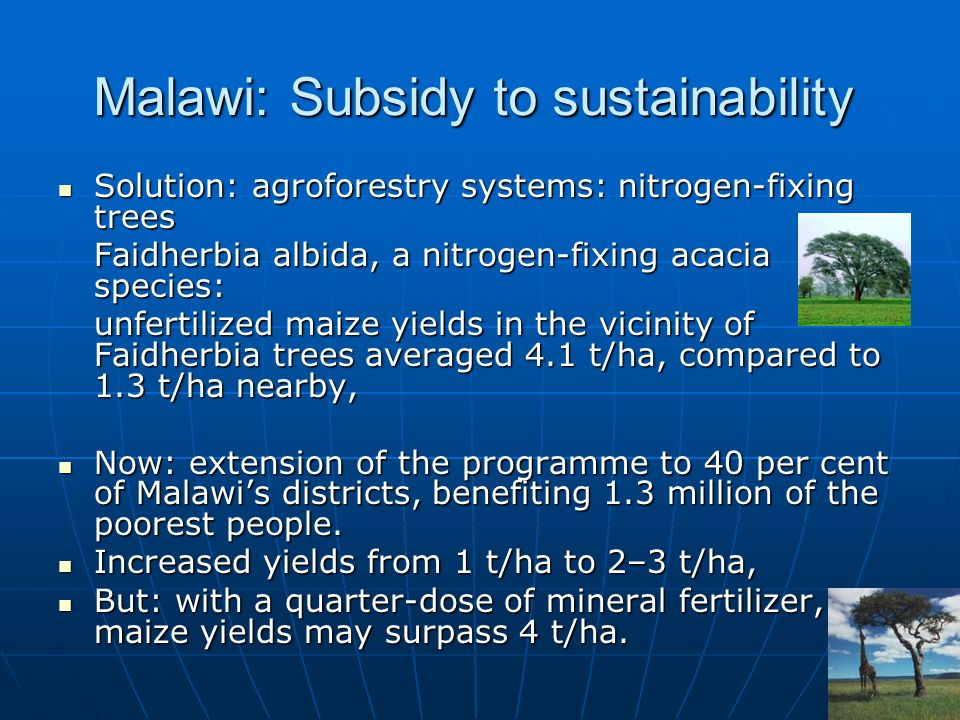 Malawi: Subsidy to sustainability Solution: agroforestry systems: nitrogen-fixing trees Solution: agroforestry systems: nitrogen-fixing trees Faidherbia albida, a nitrogen-fixing acacia species: unfertilized maize yields in the vicinity of Faidherbia trees averaged 4.1 t/ha, compared to 1.3 t/ha nearby, Now: extension of the programme to 40 per cent of Malawis districts, benefiting 1.3 million of the poorest people.