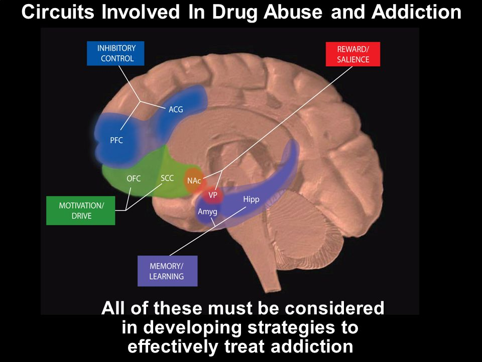 Circuits Involved In Drug Abuse and Addiction All of these must be considered in developing strategies to effectively treat addiction All of these must be considered in developing strategies to effectively treat addiction