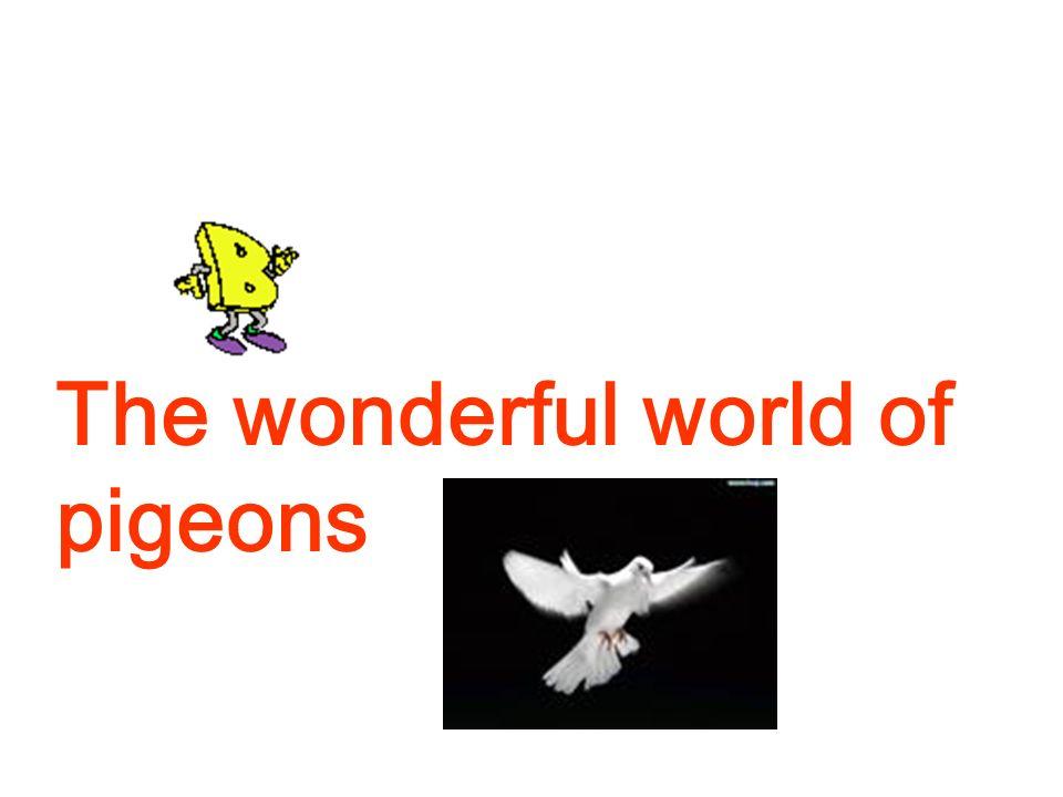 The wonderful world of pigeons