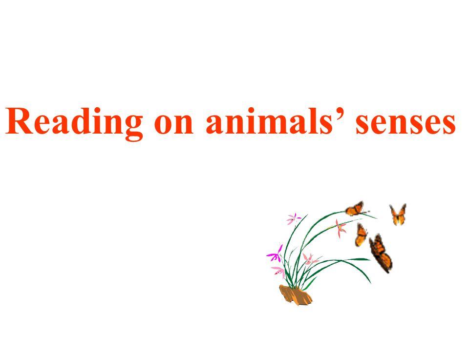 Reading on animals senses