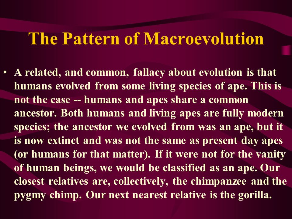 The Pattern of Macroevolution A related, and common, fallacy about evolution is that humans evolved from some living species of ape. This is not the c