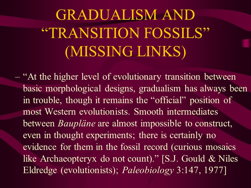 GRADUALISM AND TRANSITION FOSSILS (MISSING LINKS) –At the higher level of evolutionary transition between basic morphological designs, gradualism has