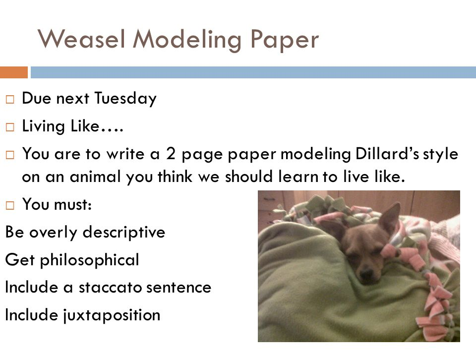 Weasel Modeling Paper Due next Tuesday Living Like….