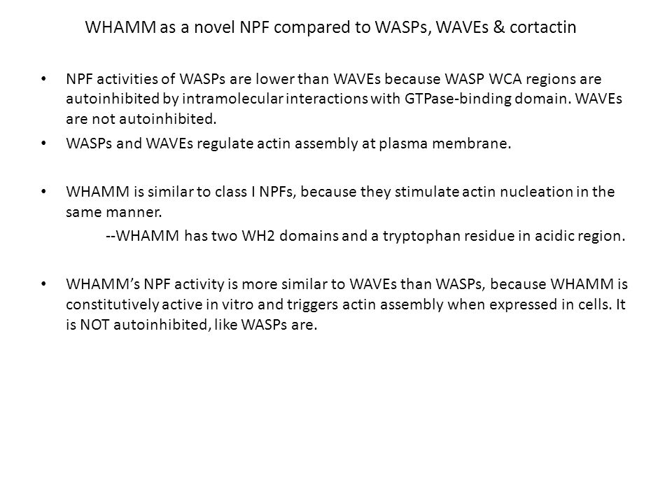 WHAMM is an Actin Nucleation Promoting Factor Question posed: What other activators of Arp2/3 complex are present in the human genome.