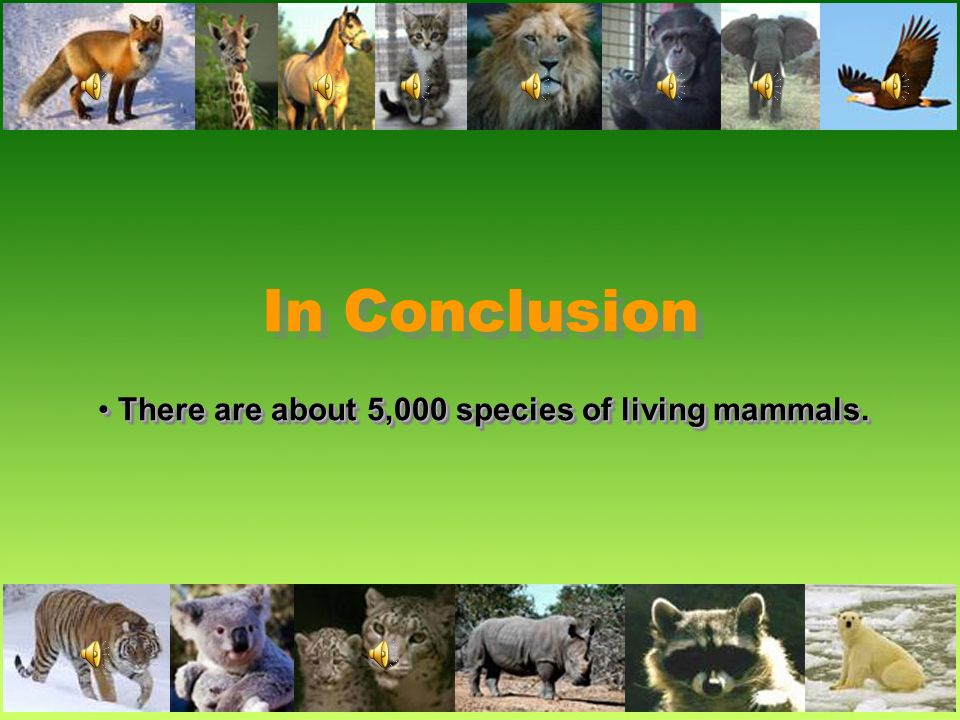 Questions/AnswersQuestions/Answers What do mammals eat? What do mammals eat? Mammals are divided into three eating groups: 1.Herbivores, herbivores fe