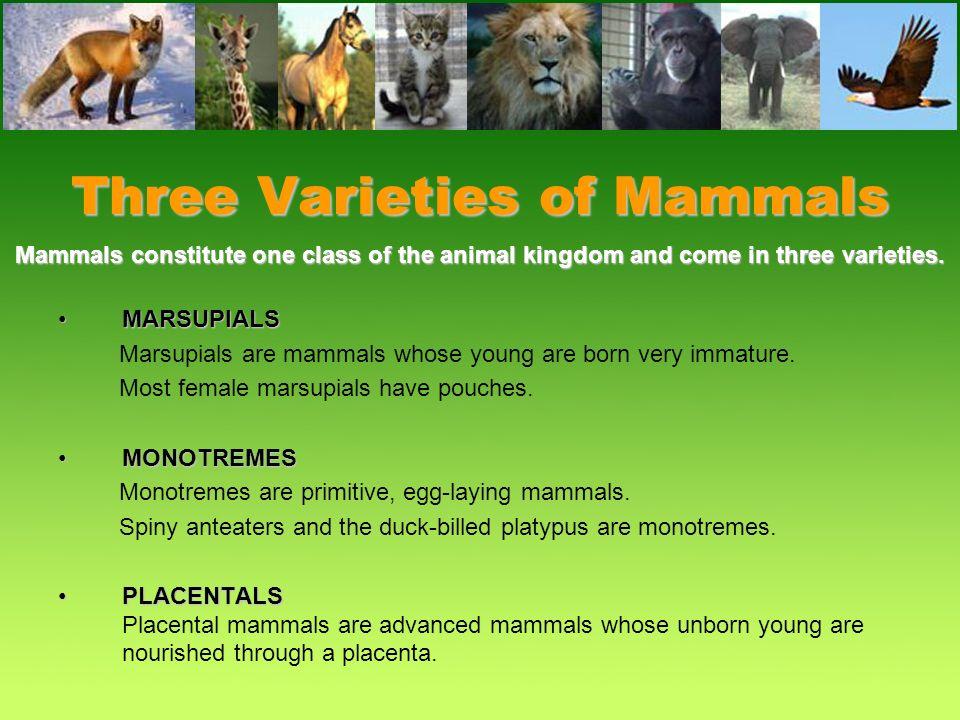 Mammal Characteristics All mammals are warm blooded.All mammals are warm blooded. Most young are born alive.Most young are born alive. They have hair