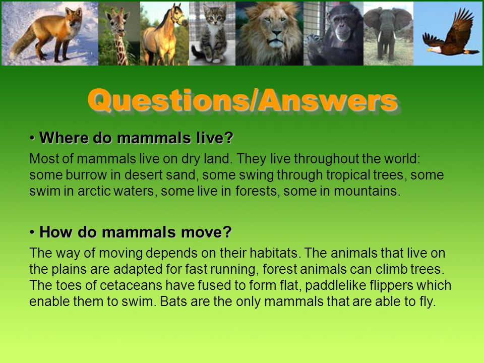 Questions/Answers What do mammals have in common?What do mammals have in common? –They all have hair, mammary glands, are warm-blooded and use their l