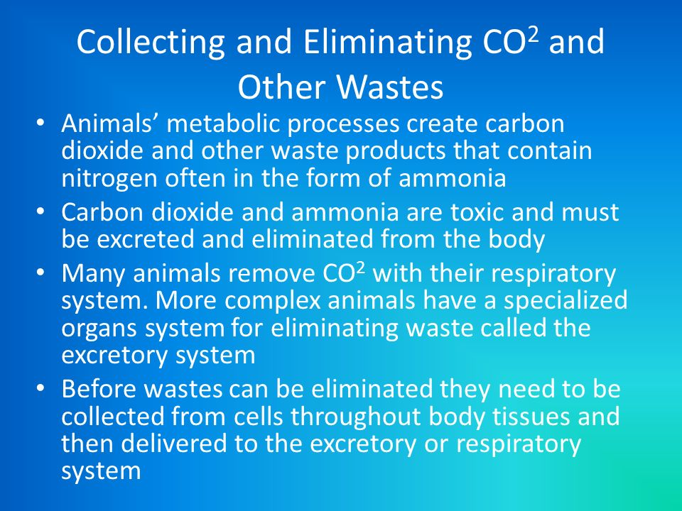 Collecting and Eliminating CO 2 and Other Wastes Animals metabolic processes create carbon dioxide and other waste products that contain nitrogen ofte