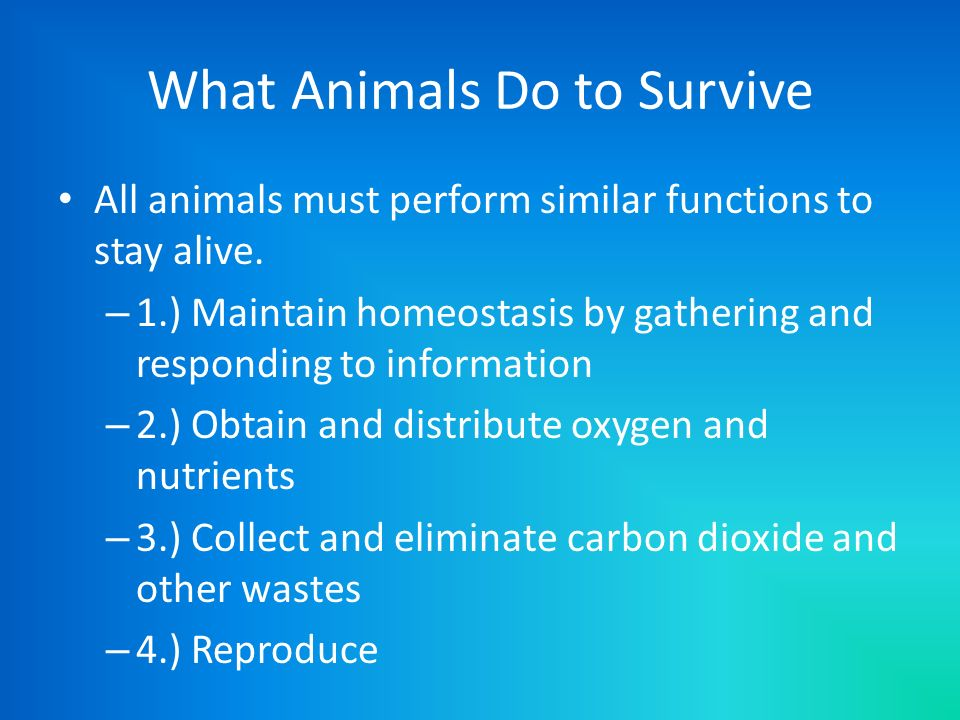 What Animals Do to Survive All animals must perform similar functions to stay alive. – 1.) Maintain homeostasis by gathering and responding to informa