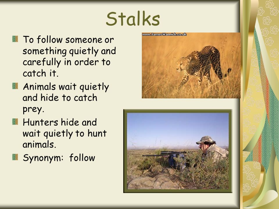 Stalks To follow someone or something quietly and carefully in order to catch it.