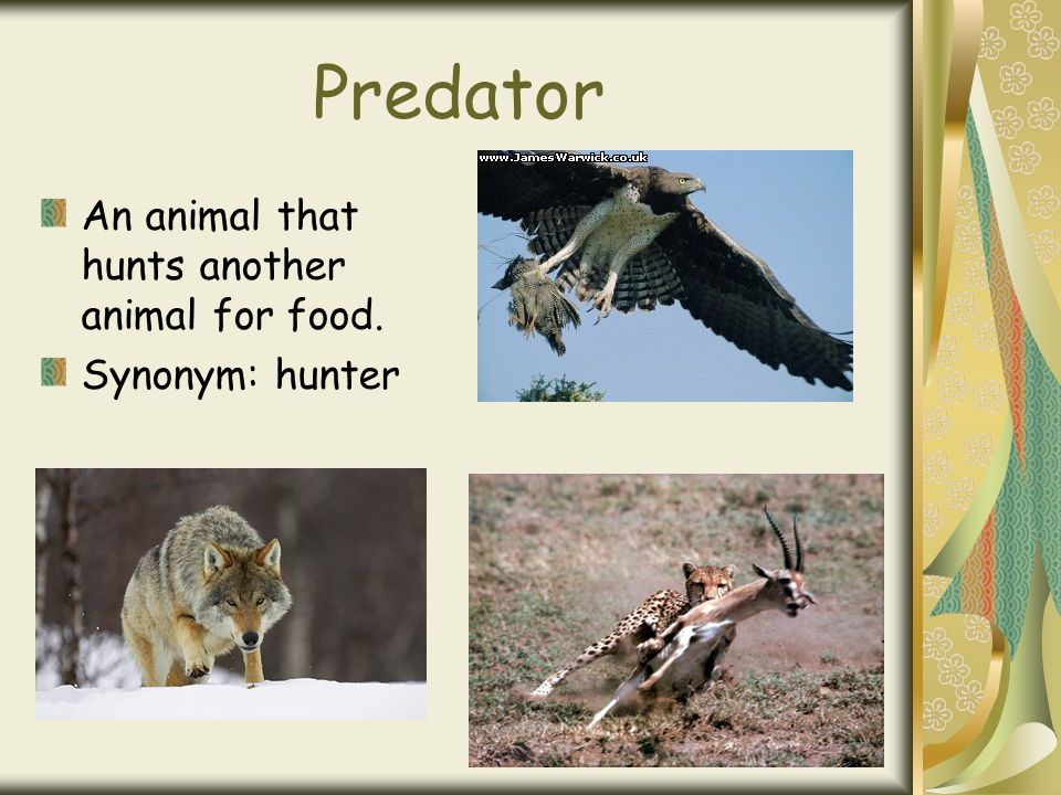 Predator An animal that hunts another animal for food. Synonym: hunter