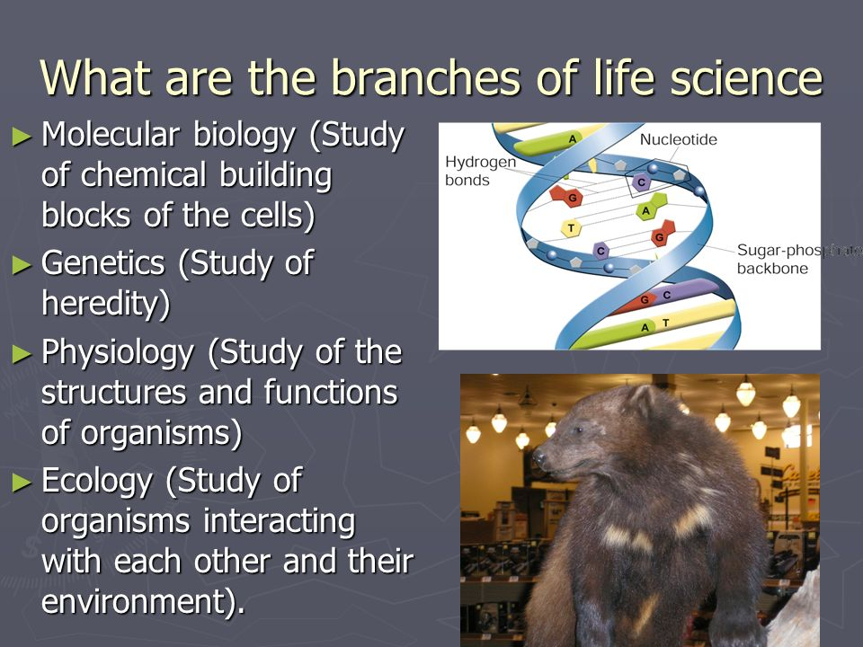 What are the branches of life science Molecular biology (Study of chemical building blocks of the cells) Molecular biology (Study of chemical building