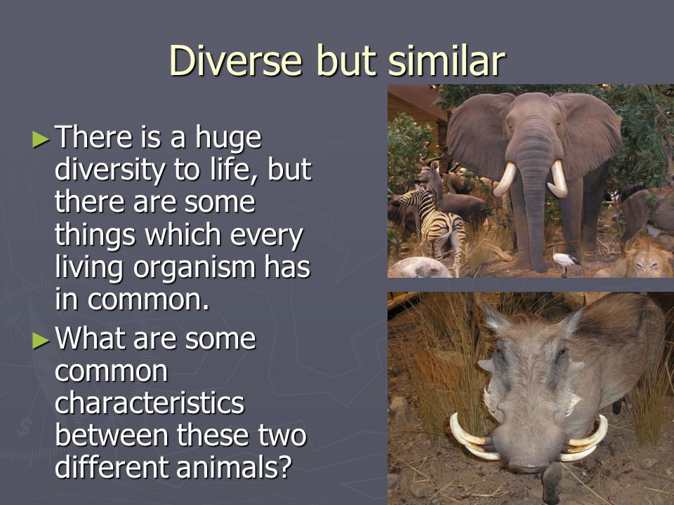 Diverse but similar There is a huge diversity to life, but there are some things which every living organism has in common. There is a huge diversity