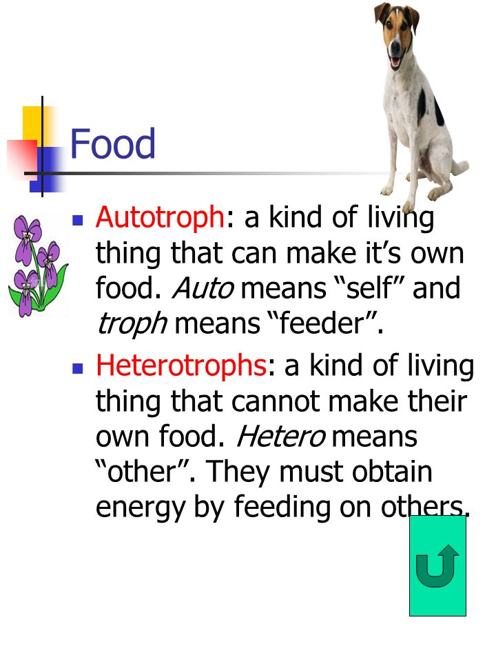 Needs of Living Things: Food Water Living Space Stable Internal Conditions