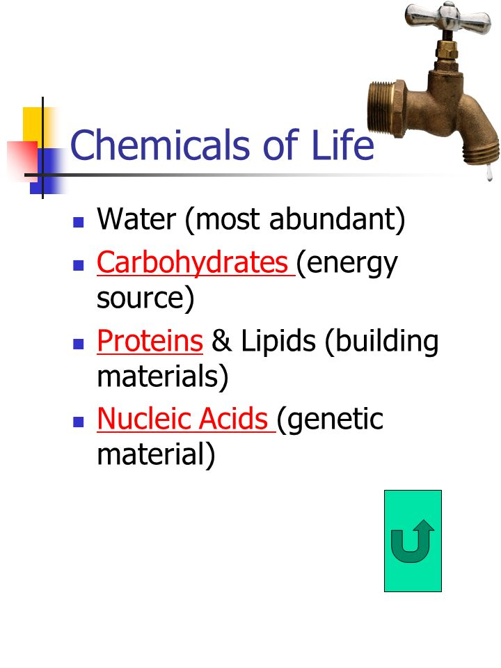 Chemicals of Life Water (most abundant) Carbohydrates (energy source) Carbohydrates Proteins & Lipids (building materials) Proteins Nucleic Acids (genetic material) Nucleic Acids
