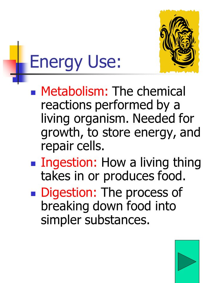 Energy Use: Metabolism: The chemical reactions performed by a living organism.