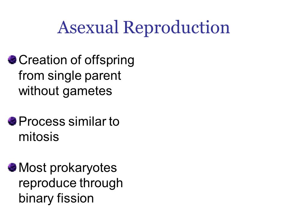 Asexual Reproduction Creation of offspring from single parent without gametes Process similar to mitosis Most prokaryotes reproduce through binary fission