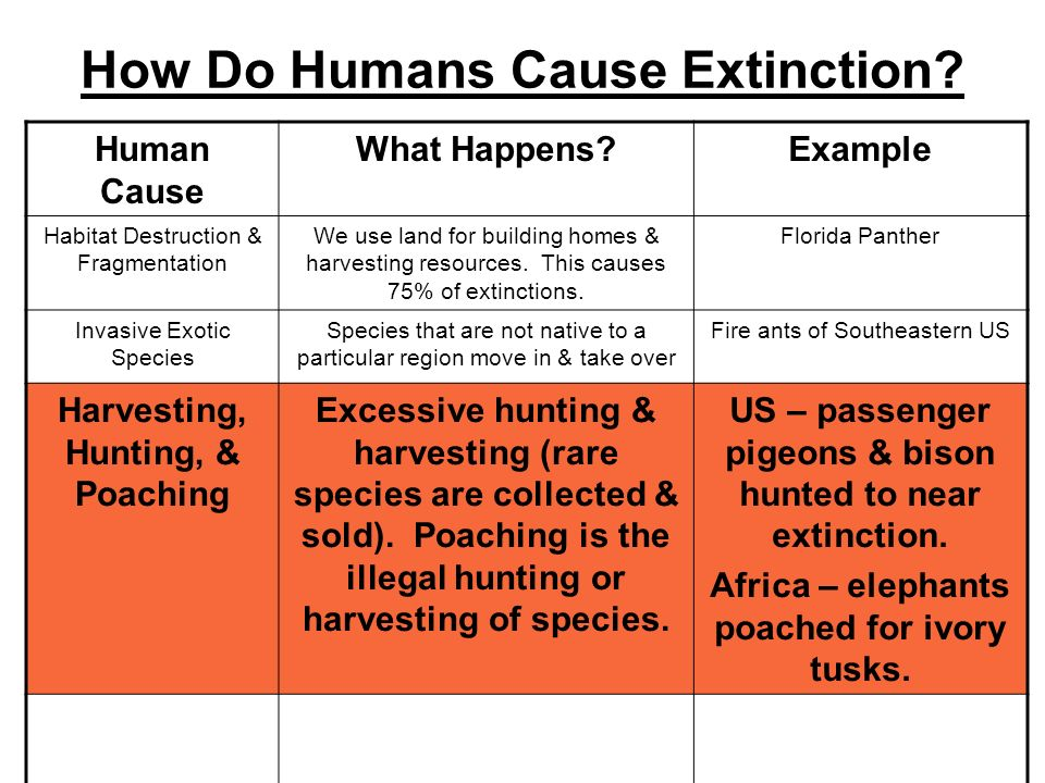 How Do Humans Cause Extinction? Human Cause What Happens?Example Habitat Destruction & Fragmentation We use land for building homes & harvesting resou