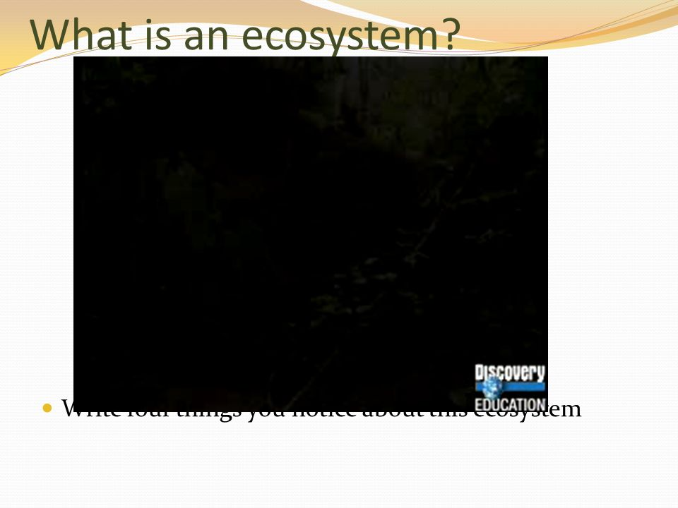 What is an ecosystem? Write four things you notice about this ecosystem